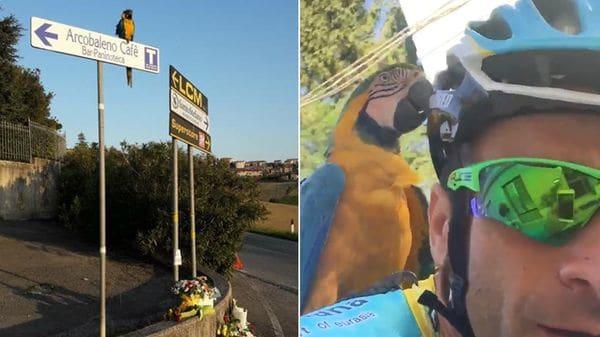 Emotiva imagen del loro que entrenaba con el fallecido ciclista Michele Scarponi: se quedó esperándolo en el lugar donde murió