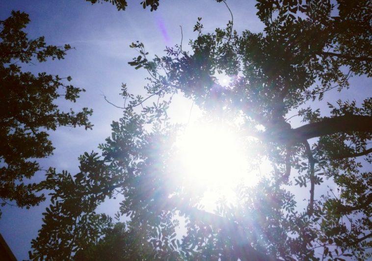 Estornudos solares: ¿Por qué a algunas personas el sol las hace estornudar?