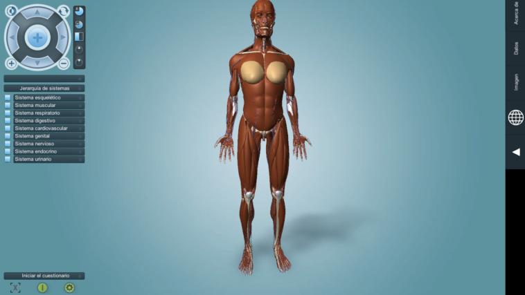 Anatronica: Anatomía humana en 3D