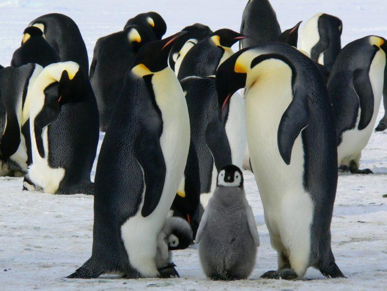 24.170.860 de líneas de código: Uno de los kernel de Linux más grandes de la historia