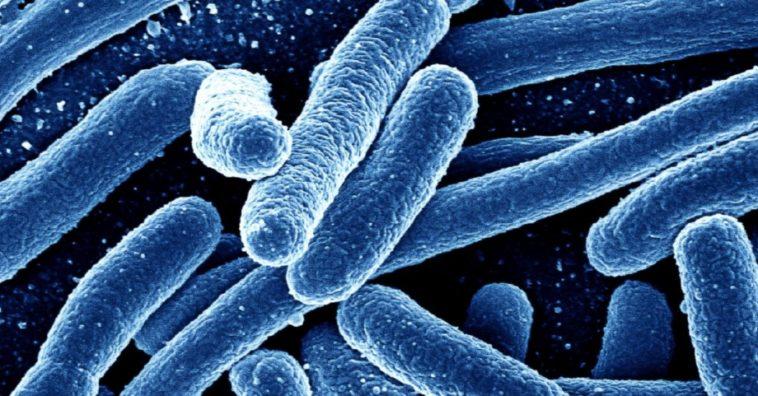 Guardan el GIF de un caballo galopando en el ADN de bacterias fecales