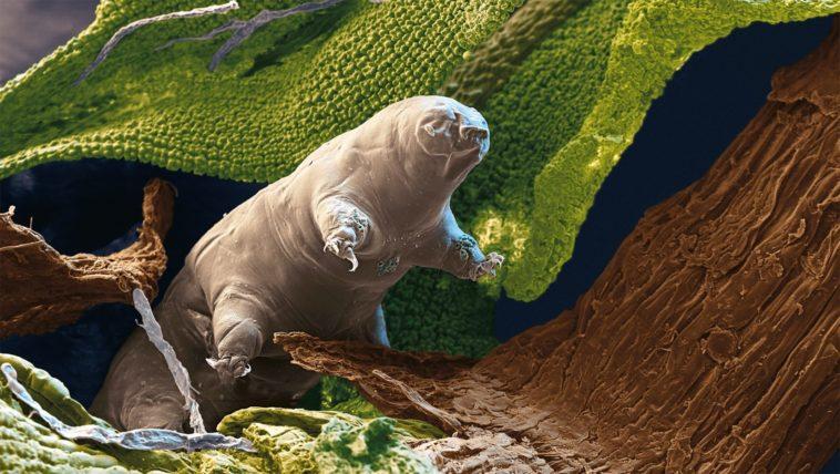Los tardígrados serán las últimas criaturas sobre la Tierra
