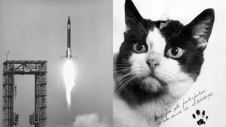 Félicette: La primera gata en el espacio exterior